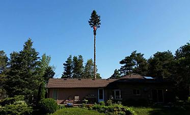 https://godontreecare.com/wp-content/uploads/2021/06/Tree-Care-before-373x225-1.jpg