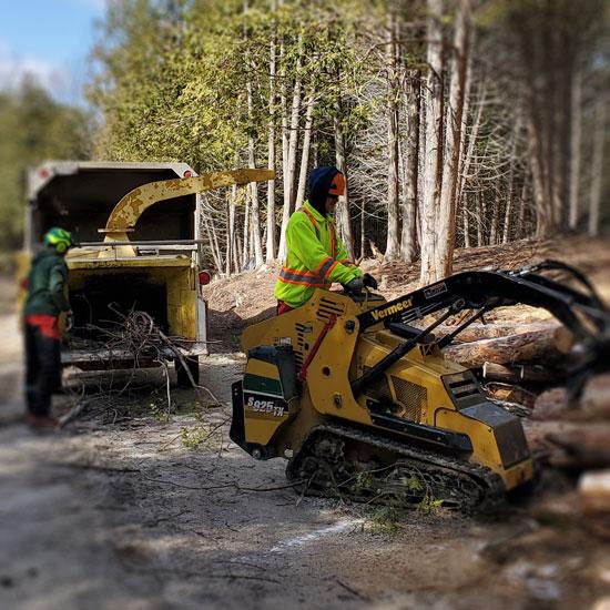 https://godontreecare.com/wp-content/uploads/2021/06/godon-tree-care-homepage-services.jpg